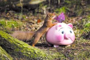 Zsebpénz és a mókusok - a XXI. századi zsebpénz